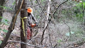 Forest restoration crews conduct ecological thinning in the Upper Applegate Watershed